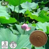 Perte de poids Extrait de feuille de lotus Nuciferine 2% -98%