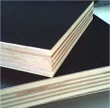 La película hizo frente a la madera contrachapada de Combi del álamo/del abedul para el edificio