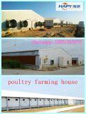 Matériel de ferme dans la Chambre de poulet avec la construction de bâtiments en acier
