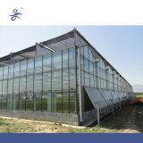 Estufa hortícola de vidro de Venlo