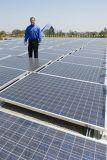 330W 녹색 다결정 광전지 태양 모듈