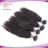 Fbl unverarbeitete Haar-Jungfrau-brasilianisches verworrenes lockiges Haar