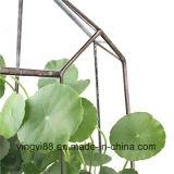 新しいアクリルの幾何学的なガラス陸生動物飼育器の卸売