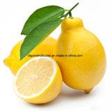 凍結乾燥させていたレモン粉のスライス