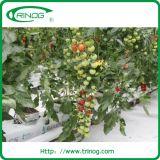 Tomatoes를 위한 고품질 Rockwool Hydroponic