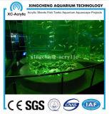 Proyecto del tanque de peces de gran acuario de peces