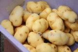 Hochdruckspray-Kartoffel-Reinigung, Schalen-Maschine Px-1500