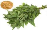 Естественная выдержка корня крапивы выдержки травы, защищает здоровье простаты