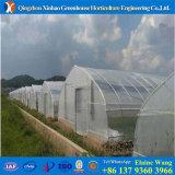 Invernadero Hidroponica de la película plástica del bajo costo para las setas para la venta