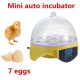 Le poulet automatique Eggs la famille Using le mini incubateur d'oeufs