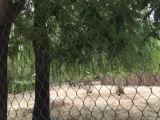 Cerca do cerco do chimpanzé do engranzamento do jardim zoológico