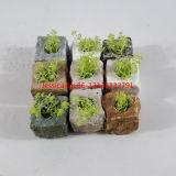 Piccoli POT e piantatrice di fiore di pietra naturali irregolari di Shpae per dell'interno ed esterno