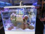 O recife coral usou o aquário leve do diodo emissor de luz do poder superior 72W de 60cm