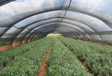 Sonnenschutz-Netz für Schutz-Landwirtschafts-Pflanzen