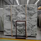 O mármore branco de Arabescato com preto veia lajes para a venda