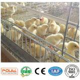 Клетки птицы цыплятины горячего высокого качества автоматические для цыпленка слоя малого