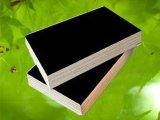 La película del álamo hizo frente a la madera contrachapada