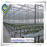 Casa verde agricultural da única extensão para o tomate