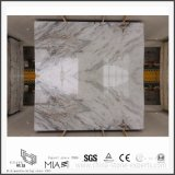 BathroomまたはKitchen Floor/Wall Decorateのための新しいArabescato Venato White Marble Slabs