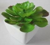 Bonsais artificiales de los Succulents de los bonsais del seguidor (Encrinite) para la decoración