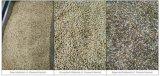Classificador descascado da cor da semente de Pinenut do classificador da cor do alho