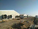 Kundenspezifisches Geflügel-Gerät für Bratrost-Produktion mit Huhn-Züchtung-Halle