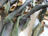 Порошок выдержки корки Waxgourd изготовления естественный