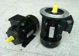 CER Approved Y80-355 o-Series 3pH Induction Motor