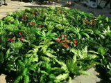 Заводы высокого качества искусственние и цветки зеленой стены Gu-Wall2313031916141