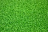 Outdoor o Indoor artificiale Green Grass per Golf (GFN)