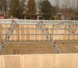 Casa de galinha USD da construção de aço da boa qualidade 35 por o medidor quadrado
