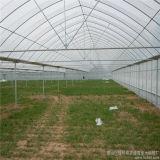 직업적인 공장 고품질 알루미늄 PC 정원 온실