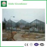 Serra di vetro del blocco per grafici d'acciaio per la verdura