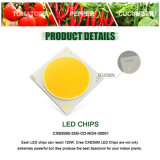 CREE Cxb3590 12000lm COB LED Grow Light Espectro completo 100W 3500k = HPS 200W Lâmpada crescente