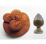 Het Uittreksel van de Installatie van het Uittreksel van Lucidum Reishi van Ganoderma
