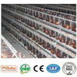 Ferme avicole un type cage de batterie automatique de couche à vendre