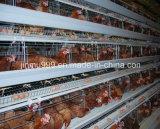 Il pollame mette a strati la gabbia del pollo della strumentazione dell'azienda agricola con l'alta qualità
