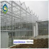 Einzelne Überspannungs-landwirtschaftliches grünes Haus für Tomate