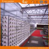 Serre chaude de Multi-Envergure de feuille de polycarbonate de qualité