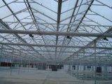 Venlo Multi-Überspannung PC Vorstand-landwirtschaftliches Gewächshaus