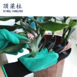 Jardin enduit de mousse de latex plantant les gants de creusement de sûreté avec du ce