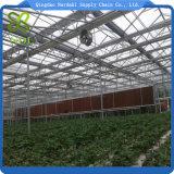 Invernadero material de la hoja de la PC del Multi-Palmo para agrícola