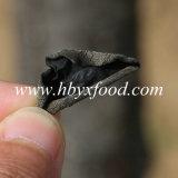يصحّح خشبيّة أذن فطر أسود فطر