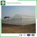 야채 정원을%s 농업 필름 온실