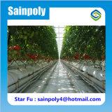Estufa hidropónica usada agricultural da alta qualidade do baixo custo