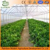 Singola serra del pomodoro della portata di agricoltura con la pellicola di plastica di Po