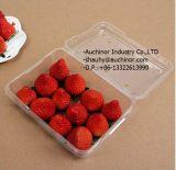 De multifunctionele Transparante Doos van de Verpakking van de Blaar van het Voedsel