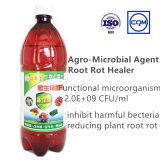fertilizzante biologico del fertilizzante liquido dell'alga