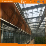 Agricultural Planting를 위한 유리제 Greenhouse