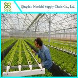 야채를 위한 최신 판매 Hydroponic 시스템
